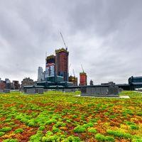 Önfenntartó növényvilág a tetőn