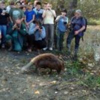 Becsengettek az OBI és a WWF hódórájára