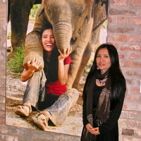 Kiállítás az elefántokért