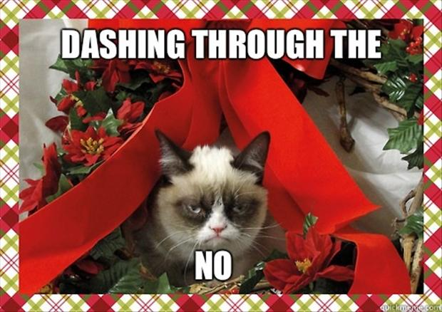 funny-christmas-pictures-and-quotes-to-share-on-facebook.jpg
