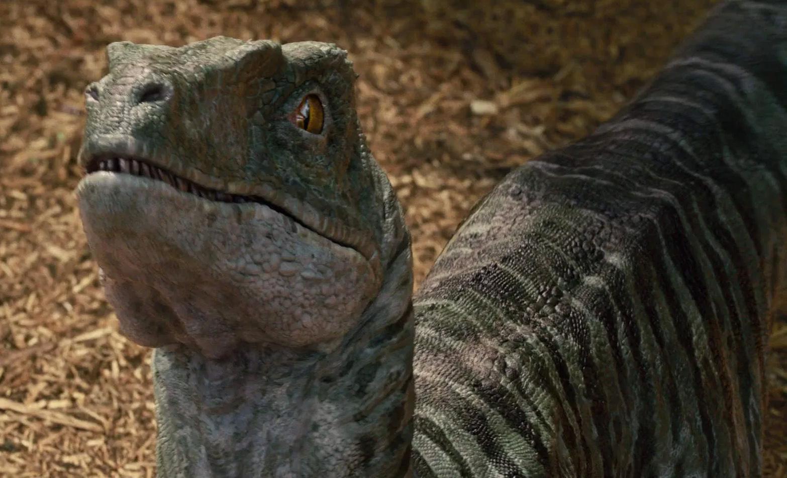 Jurassic Newsworld: Termékbemutató - Velociraptor Charlie ...