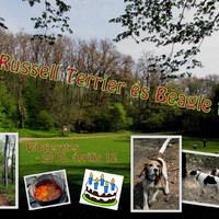 Felhívás: 31. Russell Terrier és Beagle túra