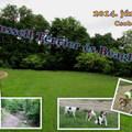 Felhívás: 26. Russell Terrier és Beagle túra