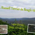 Felhívás: 32. Russell Terrier és Beagle túra