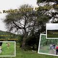 Felhívás: 28. Russell Terrier és Beagle túra