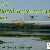 Felhívás: XVI. Russell Terrier és Beagle túra