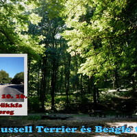 Felhívás: X. Russell Terrier és Beagle túra