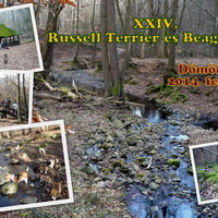 Felhívás: XXIV. Russell Terrier és Beagle túra