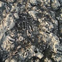 Vis, fosszíliák