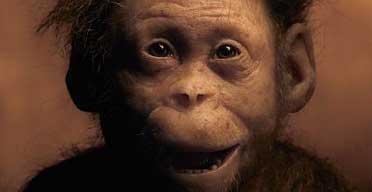 australopithecus_afarensis_selam_baby.jpg