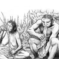 Neandervölgyi munkamegosztás