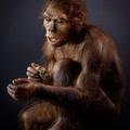 Ember tölti be a kritikus félmillió évet