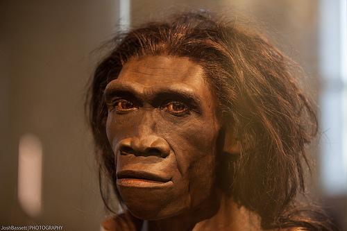homo-erectus.jpg