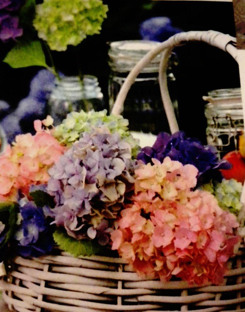 Hydrangeas in a white wicker basket.jpg