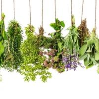 Itt a tavasz: jönnek a friss fűszernövények!
