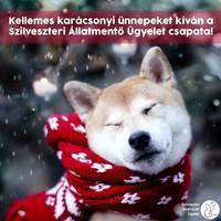 10 tanács, mire figyelj Karácsonykor, ha kutyád vagy cicád van