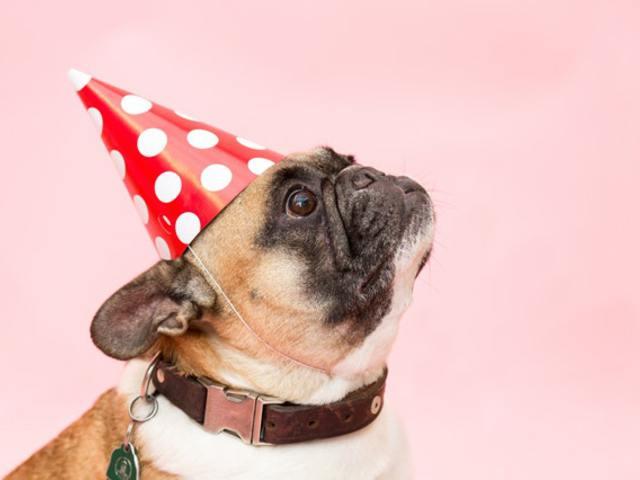 Tegyél bilétát a kutyád nyakörvére!