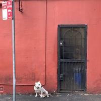 5 tanács, mit csinálj, ha még nincs meg a kutyád!