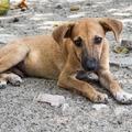 5+1 tanács arra, ha kóbor kutyát találsz szilveszter után