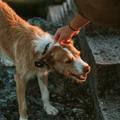 Két önkéntesünk 8 kedvenc szilveszteri kutyamentése