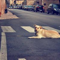 Hogyan működik a Szilveszteri Állatmentő Ügyelet?