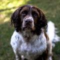 Szupernagyi és szuperpapi kutyákat mentett