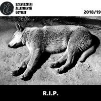 R.I.P. - kutyák és macskák, akik nem élték túl a 2018/19-es szilvesztert