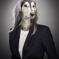 10 mód arra, hogyan segíts a szilveszterkor elszökő kutyákon