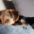 10+6 tanács, ha fél a kutyád a tűzijátéktól