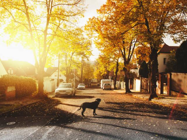 Mit tegyél, hogy a kutyád szilveszterkor is biztonságban legyen?