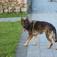 Milyen veszélyekkel néz szembe egy kóbor kutya?