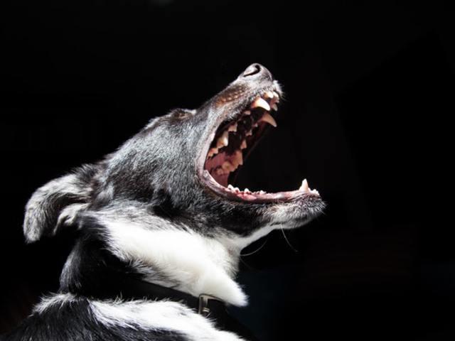 Ezernél is több állat menekült el szilveszterkor!