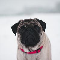 Elveszett a kutyám szilveszterkor, mit tegyek?