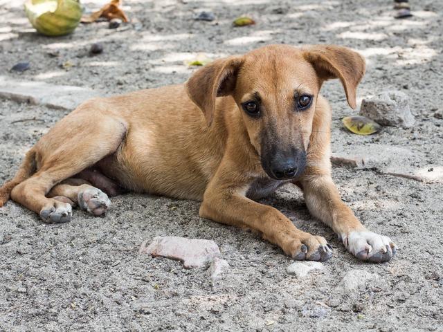 Mi az a Szilveszteri Állatmentő Ügyelet?