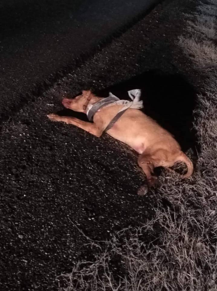!!!Esztergom!!!<br />Jelezték,hogy a Lovasliget előtt láttak elütve egy zsemle színű kutyust. Biztos félt és elszökött, lehet a gazdája is keresi.<br />Kérünk szépen egy megosztást,hátha eljut a gazdihoz és gondoskodna a továbbiakról!<br />Köszönöm!<br />https://www.facebook.com/esztergomikiralyvarosilovasliget/photos/a.1081716455333967/1081716425333970/?type=3&theater – itt: Esztergom