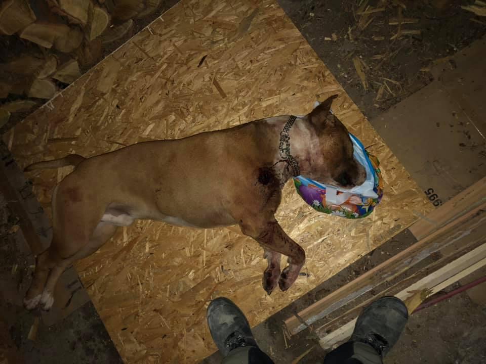 Rajmund Kajári<br />23 órája<br />Üdvözlet mondenkinek! Meg lett a kutyánk, sajnálatos modon, lelőtték!!! Ugyan ezt kívánom annak aki ezt tette vele!!!Sőrétessel fejbe kellene lőni az ilyen görény embert!!! Lehetett volna más módja is a kutya vissza juttatásának!!! Köszönöm mindenkinek aki segített valamilyen formában a megtalálására! ��������