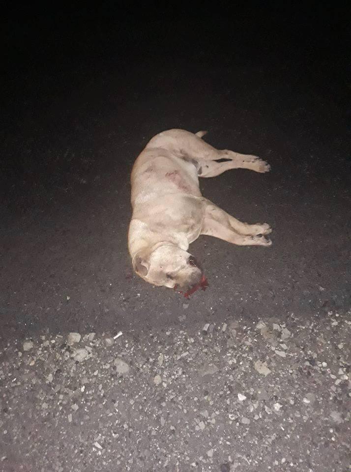 Vizslás-Újlak és Kisterenye közötti út szakaszon elütve ez a Sharpei kutyus!!��A gazdája ott meg találja,lehúztam az útról!!!<br />BOLDOG ÚJ ÉVET!!!!���<br /><br />https://www.facebook.com/photo.php?fbid=2003738116362195&set=a.566337660102255&type=3&theater – itt: Vizslás, Nograd, Hungary