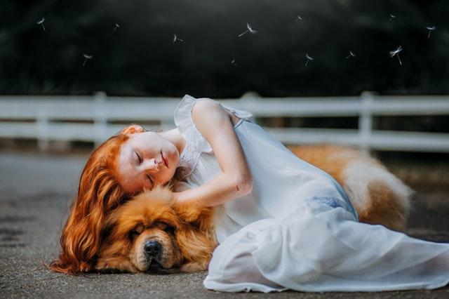 adorable-animal-beautiful-blur-573258.jpg