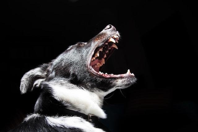 animal-dog-pet-dangerous.jpg
