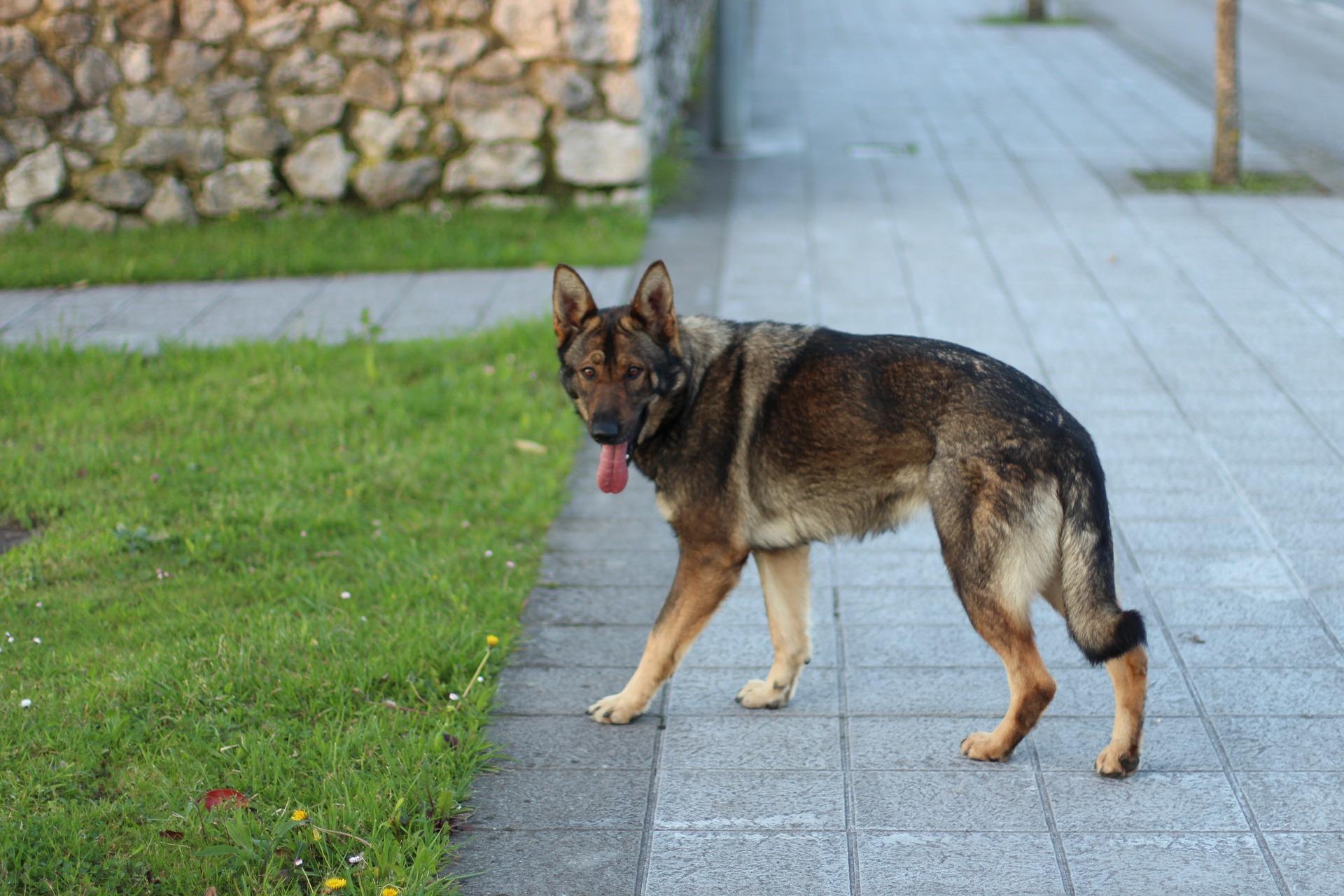 dog-1032585_1920.jpg