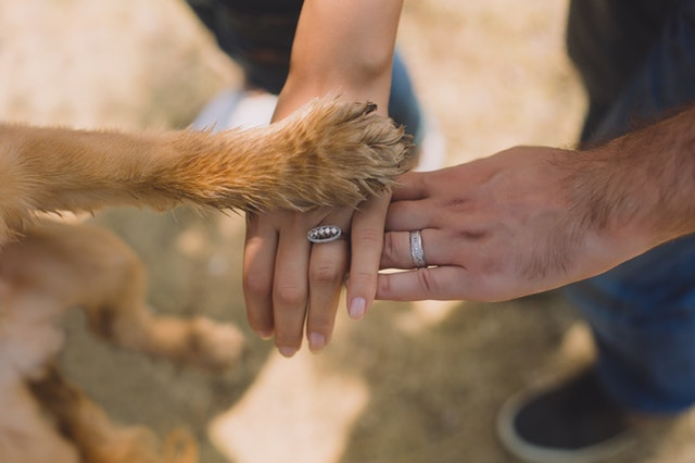 two-person-with-rings-on-ring-fingers-792775.jpg