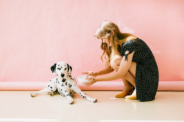 white-and-black-dalmatian-dog-sitting-in-front-of-woman-near-3297502.jpg