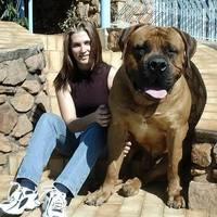 Íme, a világ legnagyobb kutyája!