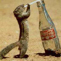 125 éves a Coca-Cola! Erre iszunk!