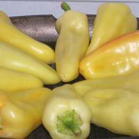 Sültpaprika-saláta