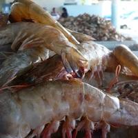 Ubatubai halpiac, garnélarák és polip körkép