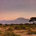 Utazás Kenyába 3. rész - Amboseli, a várva várt