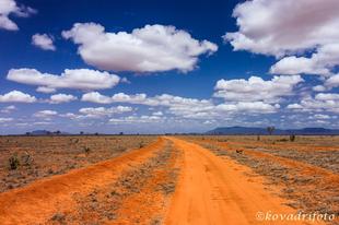 Utazás Kenyába 2. rész - A vörös elefántok és a leopárdok földjén