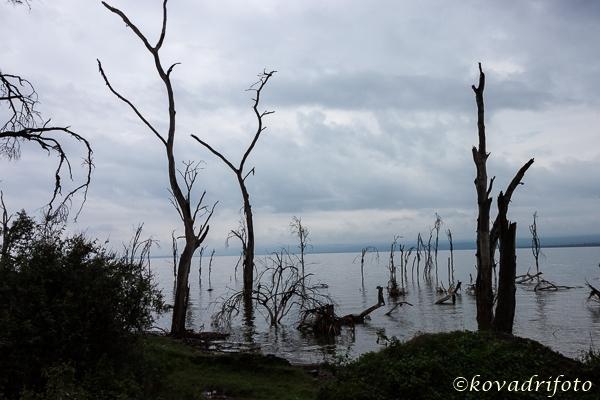 halott fák partja