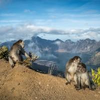 Sárkányvadászat működő vulkánok között